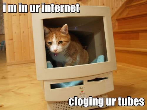 "Picture of a cat in a hollowed out computer monitor, with the caption 'I'm in your internet, clogging your tubes"" (spelled wrong)"