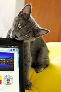 A cat chewing on a monitor. Link opens a larger image.